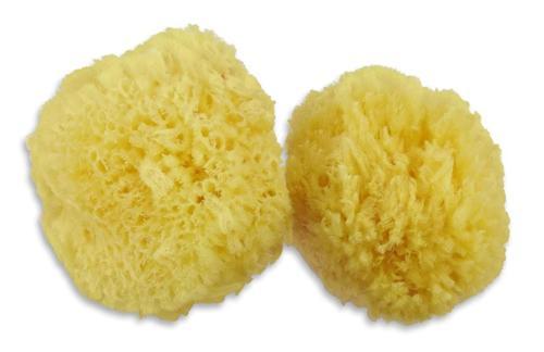 Contented Infant Natural Sponge- 6pk 3